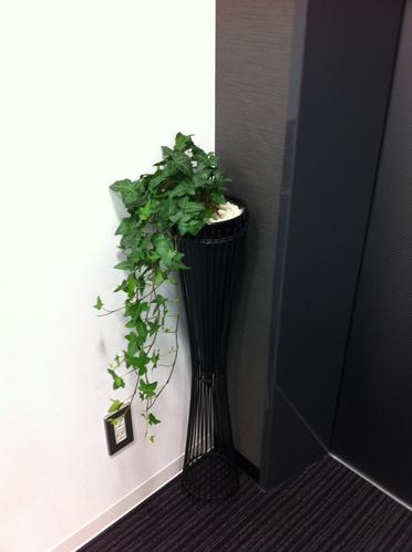 green_ivy.jpg